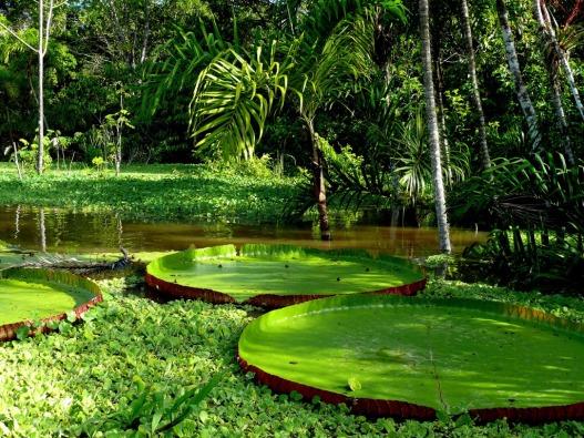 cozy-plants-amazon-rainforest-wallpaper-normal