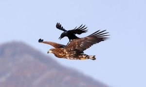eagle_04