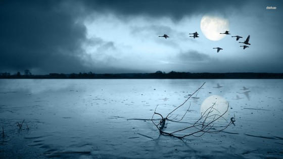birds-flying-over-a-frozen-lake