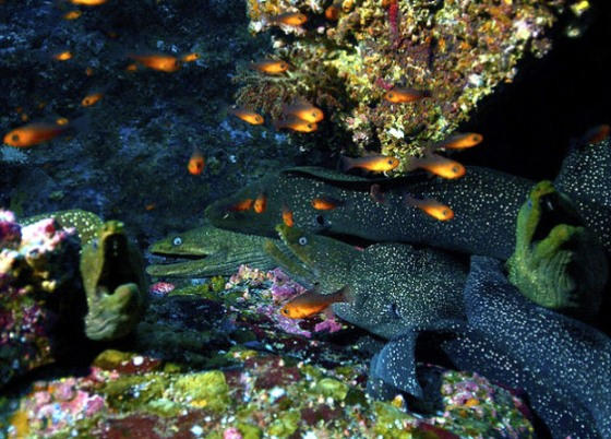 north-america-moray-eels-625x450