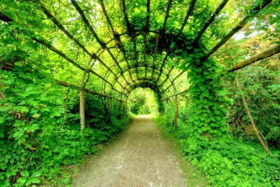 Verdant+Tunnel