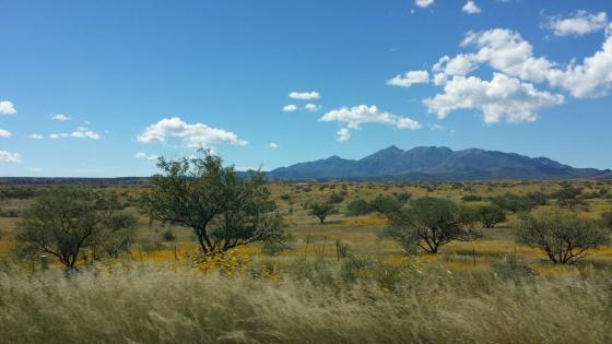 Sedonia - Arizona Wine Country