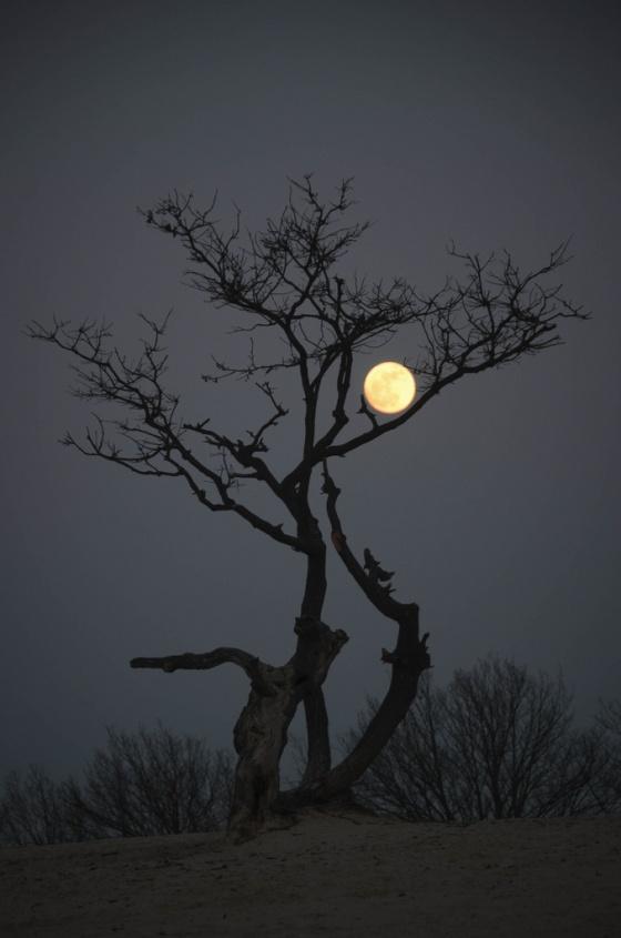 Ghost Eye Tree