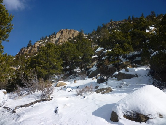 Pinon and snow