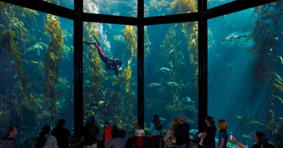 kelp-forest-oceans