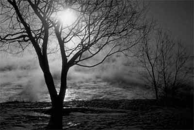 BlackTrees_Fog_400X267