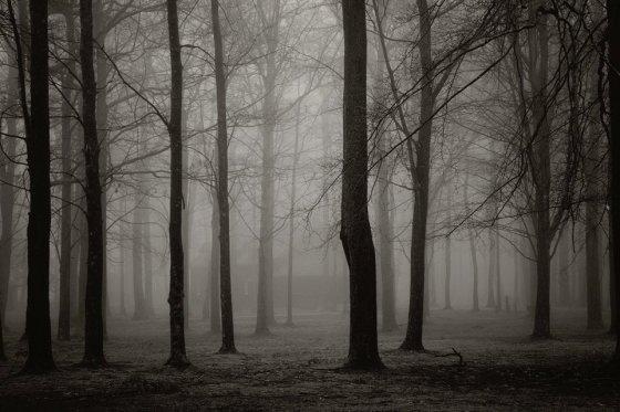 fog 0
