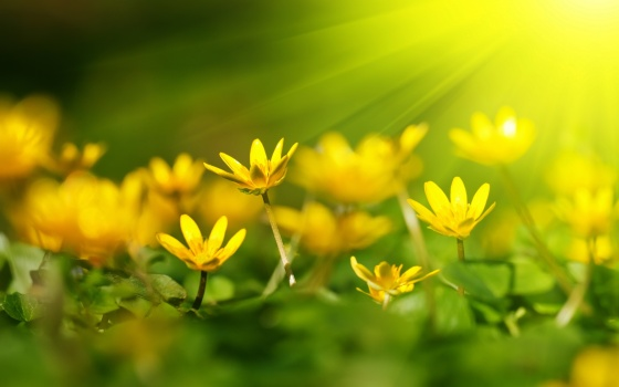 yellow-flower-in-sunshine